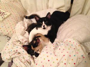 Break-up Kitties