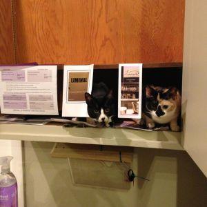 kitty cowork