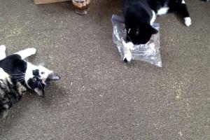Co-working Kitties